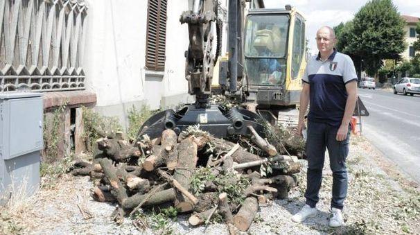 Un momento dei lavori di taglio alberi nel viale Civitali foto Alcide