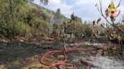 Il fuoco ha distrutto un'area di dieci ettari