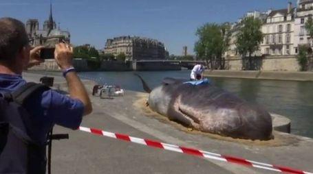 Una balena a Parigi (Ansa)