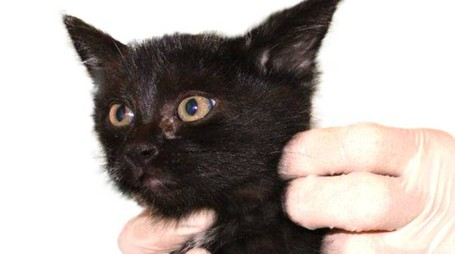 Il gattino salvato dai volontari