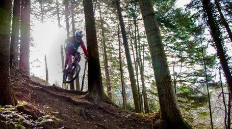 Ciclista nei boschi in una immagine d'archivio