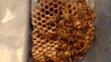 San Benedetto del Tronto, sciame di vespe in spiaggia. Turisti all'ospedale