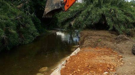 Ruspe in azione sulle sponde del fiume Olona