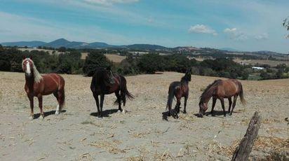 King insieme con gli altri cavalli salvati da Animalisti italiani onlus
