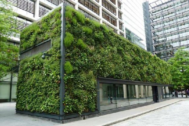 I vantaggi delle pareti verdi verticali - Magazine - Tempo Libero - quotidiano.net