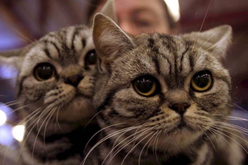 Giornata Internazionale del Gatto (Afp)