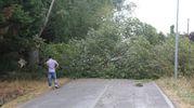 La strada è rimasta chiusa a lungo (foto Ravaglia)