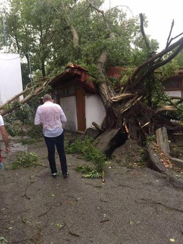 Gli alberi abbattuti dal maltempo (foto Moretto)
