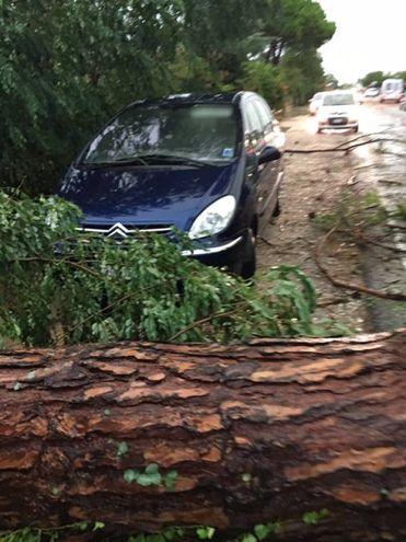 Molte le auto danneggiate (foto Moretto)