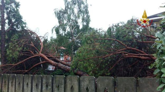 Gli alberi abbettuti sulle case