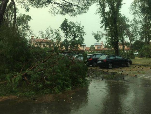 Il maltempo ha colpito l'isola di Albarella e il litorale polesano (foto Moretto)