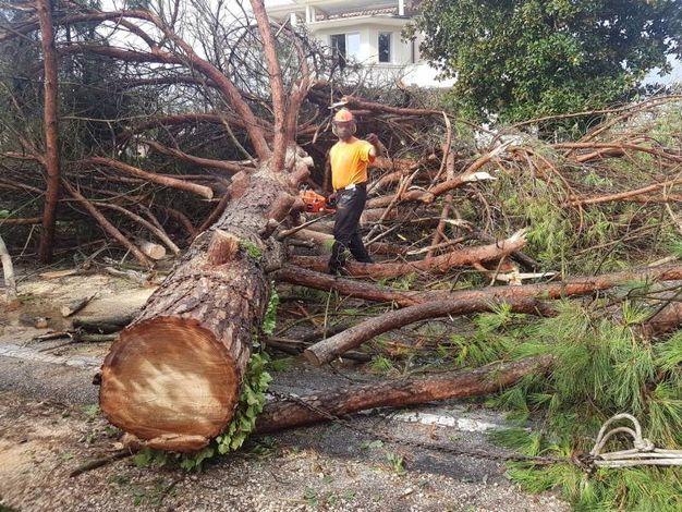 I grossi tronchi abbattuti dal vento (foto Donzelli)