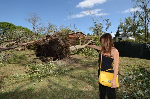 Maltempo in Veneto, alberi caduti ad Albarella (foto Donzelli)