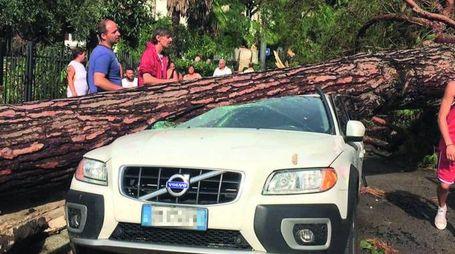 Un albero su una macchina ai lidi
