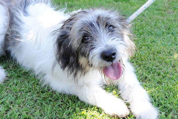 Il cane Boff abbandonato 1 anno fa nei pressi del cimitero