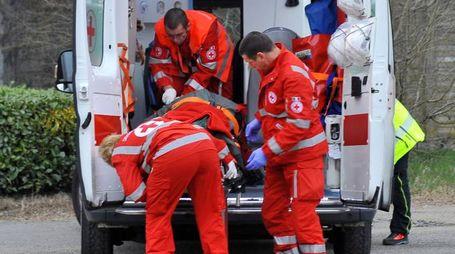 Il ragazzino è stato trasportato al pronto soccorso; nel riquadro un dogo argentino