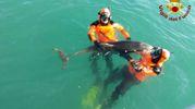 Il salvataggio del delfino nelle acqua del canale scolmatore al Calambrone