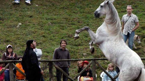 «Comano cavalli» taglia quest'anno il traguardo del mezzo secolo di vita