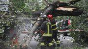 Il pioppo caduto in via Ferruccio Garavaglia (foto Schicchi)