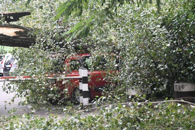 Negli ultimi giorni i residenti avevano sentito l'albero scricchiolare (foto Schicchi)