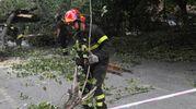 L'albero caduto in via Garavaglia, zona San Donato, proprio di fronte al liceo Copernico (foto Schicchi)