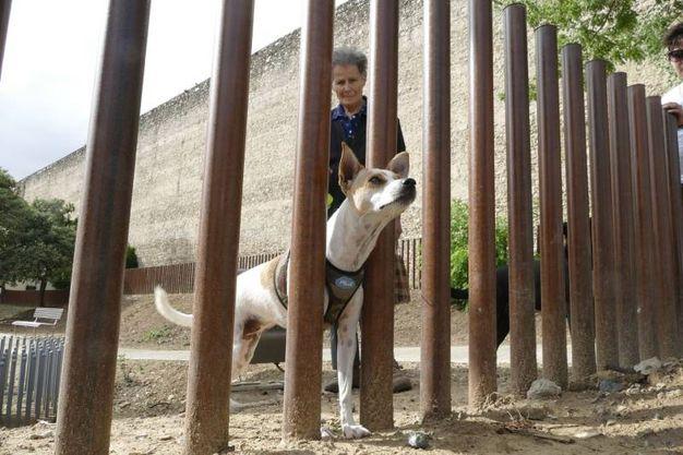 L'area di sgambatura per cani in via Pomeria (foto Attalmi)