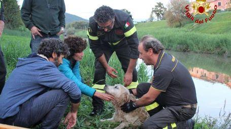 Il cane Labrador appena salvato dai vigili del fuoco