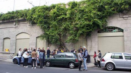 Il glicine di via Ferrante Aporti (Newpress)