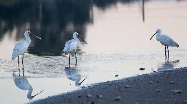 Uccelli migratori in una foto L.Gallitto
