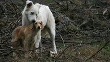 Cani randagi in una foto L.Gallitto