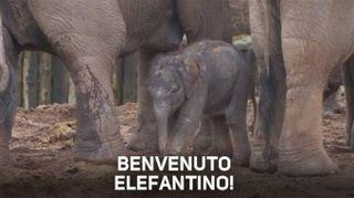 Che emozione! Elefantino fa i suoi primi passi