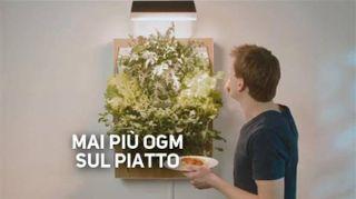 Come far crescere la verdura sul proprio muro di casa