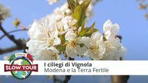 I cigliegi di Vignola