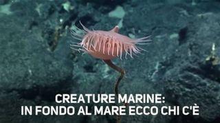 Sorpresa a 3770 metri sott'acqua: una pianta carnivora