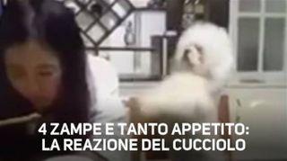 Un cane che spinge la padrona: l'avete visto?