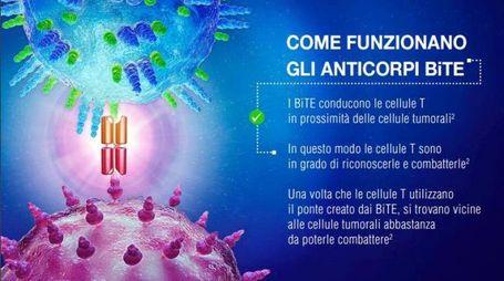 Anticorpi BiTE, Foto di repertorio dal sito www.amgen.it