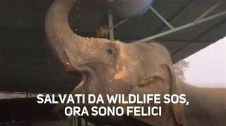 Elefanti maltrattati: ma in India hanno una nuova vita
