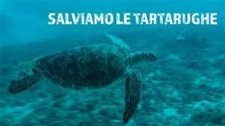 Meraviglia: a Bali le tartarughe marine tornano libere