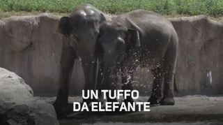 Questi due elefanti hanno un rimedio contro il caldo...