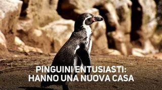 C'è una festa in piscina riservata ai... pinguini!