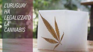 Marijuana: a legalizzarla arriva l'Uruguay