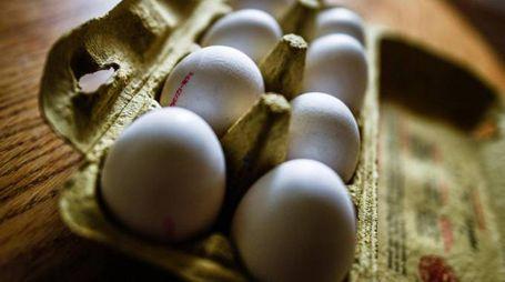 Allarme per le uova contaminate con il fipronil (Ansa)
