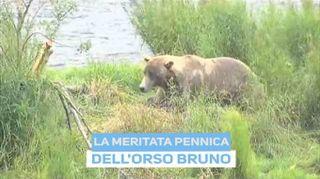 L'orso è come noi: dopo mangiato...
