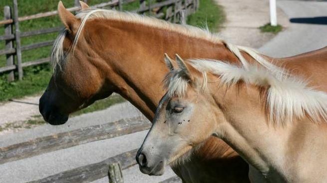 Cavalli e umani  quando il cuore batte all unisono - Cultura ... 4d80e7cdebe9