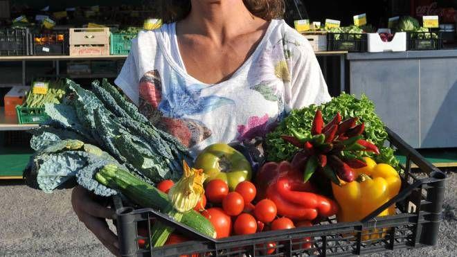 Frutta e verdura, foto generica (Germogli)