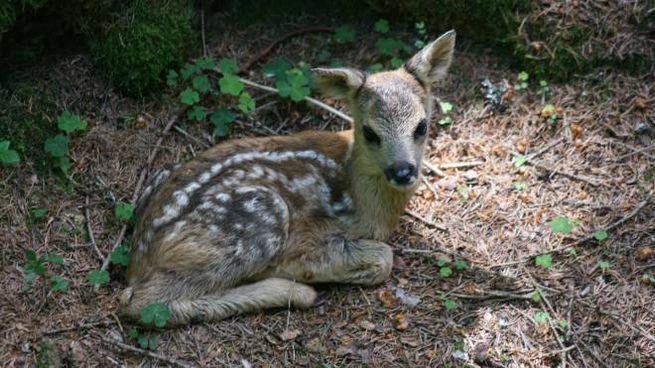 Un bambi (foto L.Gallitto)