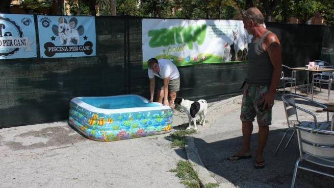 La piscina per cani pensata dalle ragazze del Monia  bar 610