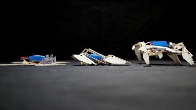 Nella sequenza il mini robot prende forma e si muove autonomamente