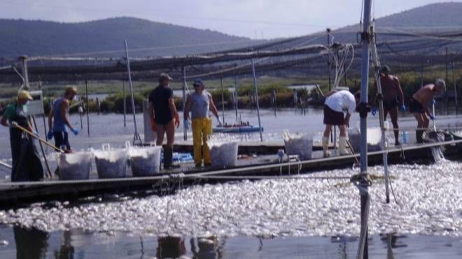 La conta dei danni nella laguna di Orbetello (Foto Casalini)