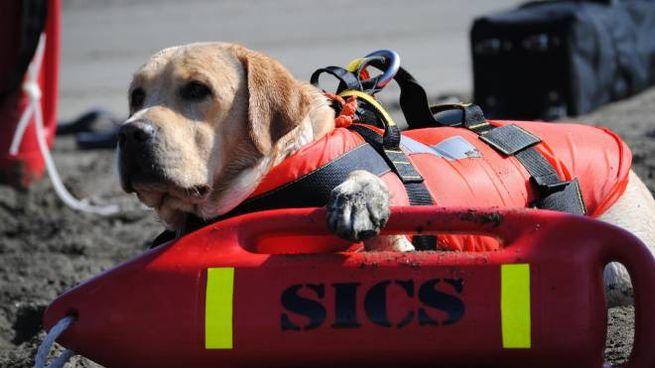 Cane di salvataggio in una foto Ansa